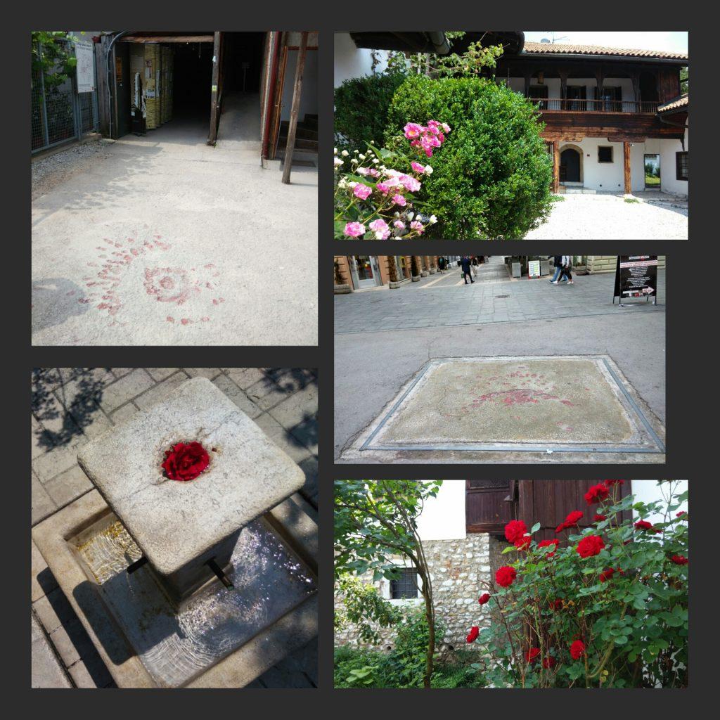 Sarajevo città delle rose