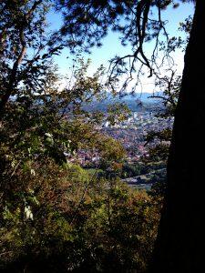 Nova Gorica tra la vegetazione Discesa dal Monte Sabotino