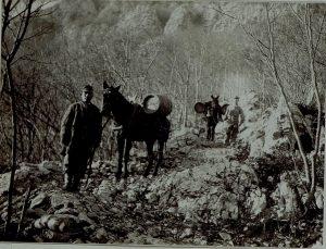 trasporto d'acqua con i muli sulle postazioni austroungariche sul Monte Sabotino