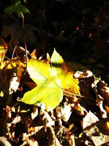 Si sta come / d'autunno / sugli alberi / le foglie