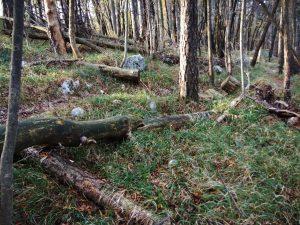 Alberi a terra sul San Gabriele come soldati caduti sotto il fuoco delle mitragliatrici