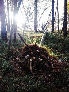 Albero stroncato dalla terra come un soldato dalla sua vita
