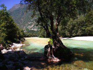 L'albero in mezzo all'Isonzo
