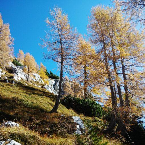 Pini Mughi e Larici scendendo verso Casera Cregnedul