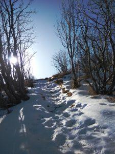 Neve sul sentiero 726 Matajur