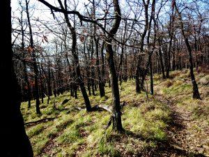 Nel bosco scendendo verso Barcola