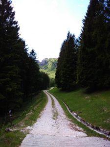 La strada che scende verso il Rifugio Vualt