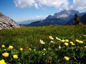 Botton d'oro e Anemoni Montani e sullo sfondo la Creta d'Aip
