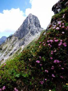 Rododendro e il Zuc della Guardia