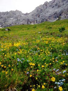 Nontiscordardimè alpino e Potentilla Aurea