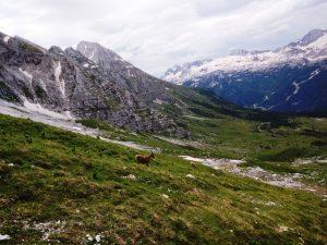 La piana del Montasio