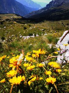 Arnica e l'Altopiano del Montasio