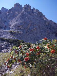 Sorbo degli Uccellatori e Torre Amalia sul Montasio